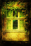 Old ivy-clad window royalty free stock photo