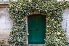 Old ivy wall with small green door in Westminster, London Stock Images