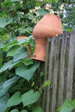 Old jars lying on the fence. Decorative clay vase on wooden fence stock photography