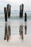 Old jetty piles at St. Clair Beach, Dunedin Stock Photography