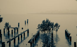 Old jetty remains, Northland New Zealand. Split toned image old jetty remains and mangroves on edge of Kohukohu Harbour on dull misty day, Northland New Zealand Royalty Free Stock Photo