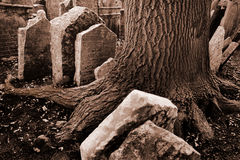 Old Jewish cemetery. A huge trunk of tree among old tombstones in old Jewish cemetery in Old Town in Prague, Czech republic Stock Photography