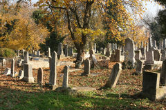 Old jewish cemetery. In autumn season. Location: Timisoara, Romania royalty free stock photos