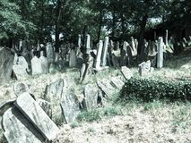 Old Jewish cemetery Royalty Free Stock Photography
