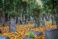 Old jewish cemetery. In Vienna royalty free stock photo