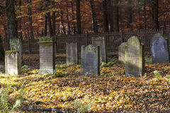 Free Old Jewish Graveyard In A Forest Royalty Free Stock Image - 48679346