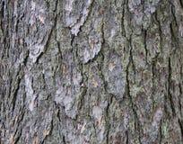 Juniper bark texture royalty free stock photo