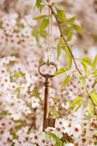 Old key in Spring with blossom Stock Photo