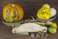 Old kitchen scale vegetable. Autumn harvest of pumpkins. Preparing for Halloween. Growing vegetables in a home garden. Royalty Free Stock Photos
