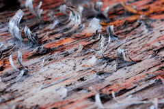 Old lacquer peeling of. The wooden board Royalty Free Stock Photo