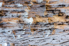 Old lacquer peeling of. The wooden board Stock Photo