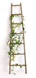 Old ladder decorated with ivy twigs Stock Photography