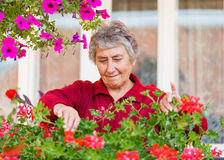 Old lady with flowers Royalty Free Stock Images