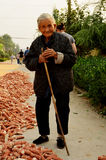 Old Lady with Freshly Harvested Sweetcorn, China Stock Photos