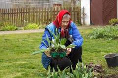 Old lady gardening Stock Image