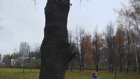 Old lady looks up at high fenced tree in park. Old lady looks up at high fenced tree in autumn park stock footage