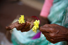 Old lady making garland of flowers. Goa, India. Stock Photos