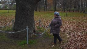 Old lady walks near old fenced tree. In park stock video