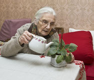 Free Old Lady Watering Flower Stock Photos - 23801243