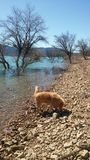 The old lake. Lake with stones and my dog and sun Royalty Free Stock Photo