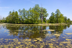 Old lake in sunny day Royalty Free Stock Photo