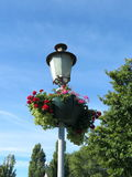 Old lamp and flowers Royalty Free Stock Images