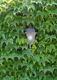 Old lamp in foliage Stock Images