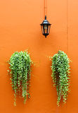 Old lamp with green plants on wall Royalty Free Stock Images