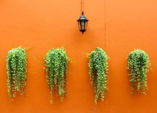 Old lamp with green plants on wall Stock Photos
