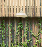 Old lamp hanging outdoor and ivy plant Stock Photos