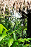 Old lamp under leaves roof with tropical forest Royalty Free Stock Image
