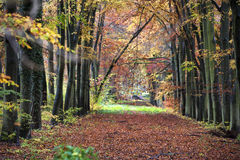 Old lane in the woods Royalty Free Stock Photos