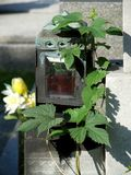 Old lantern on the cemetery Royalty Free Stock Image