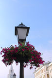 Old lantern with flowers Royalty Free Stock Image