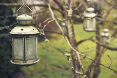 Old lantern hanging from tree. In garden Royalty Free Stock Photography