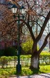Old lantern in the sakura park. Lovely urban scenery in springtime Royalty Free Stock Image