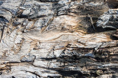 Old Large Tree Root Royalty Free Stock Photos