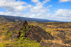 Old Lava Field in Hawaii Stock Photos