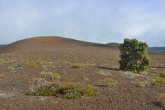 Old lava field and a tree in Volcanoes National Park, Big Island of Hawaii Stock Photo