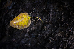 Old leaf before fall. Alone Stock Images