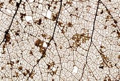 Old Leaf Macro. Network of veins in rotting leaf Stock Image