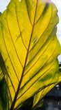 Old leaf and sunlight. Tree infect Royalty Free Stock Photography