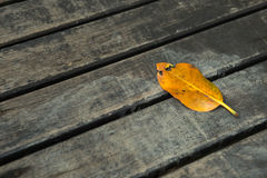 Old leaf on wooden Royalty Free Stock Photography