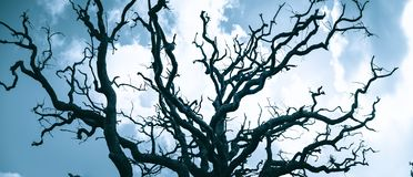 Old leafless tree crown of oak tree. Against sky royalty free stock photography