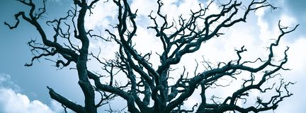 Old leafless tree crown of oak tree. Against sky royalty free stock photo