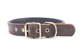 Old leather dog-collar isolated Royalty Free Stock Photo