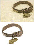 Old leather dog pet collar isolated background collage Stock Images