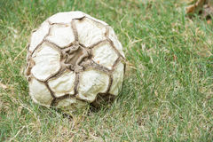 Old leather soccer ball Stock Photo