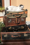 Old leather suitcases and cat Royalty Free Stock Photography