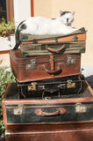 Old leather suitcases and cat Stock Photos